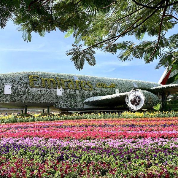 Dubai Miracle Garden A380 Flugzeug