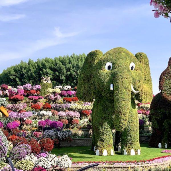 Dubai Miracle Garden Blumen Elefant