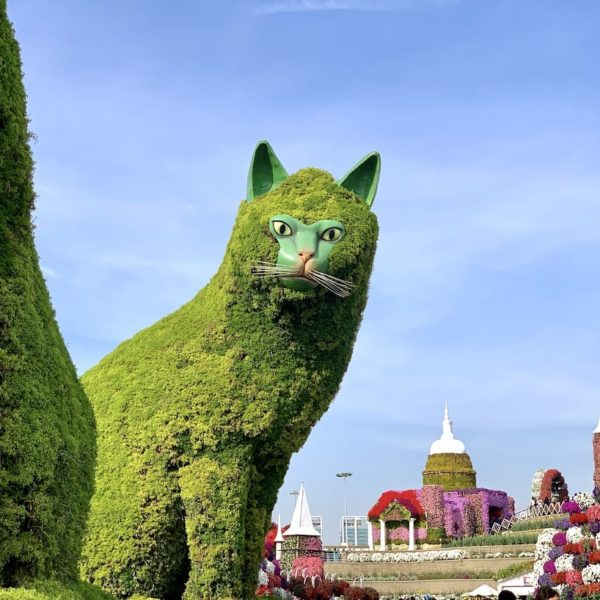 Dubai Miracle Garden Katze