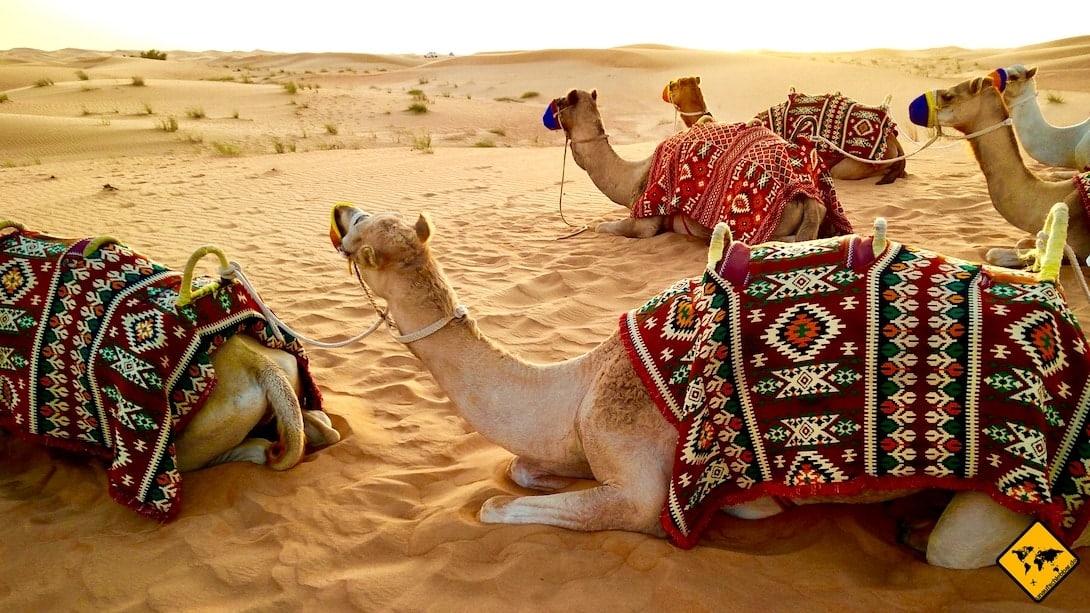Dubai Wüstensafari Kamele