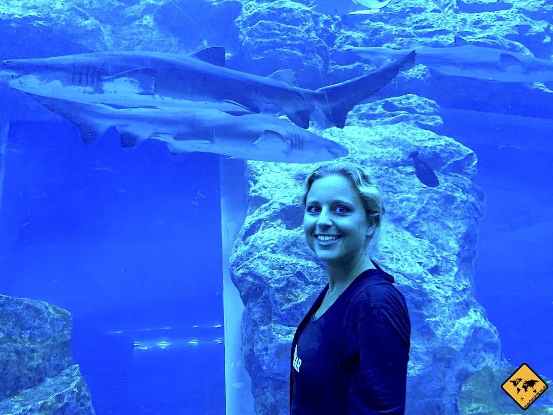 Dubai im Sommer Sightseeing Aquarium Haie