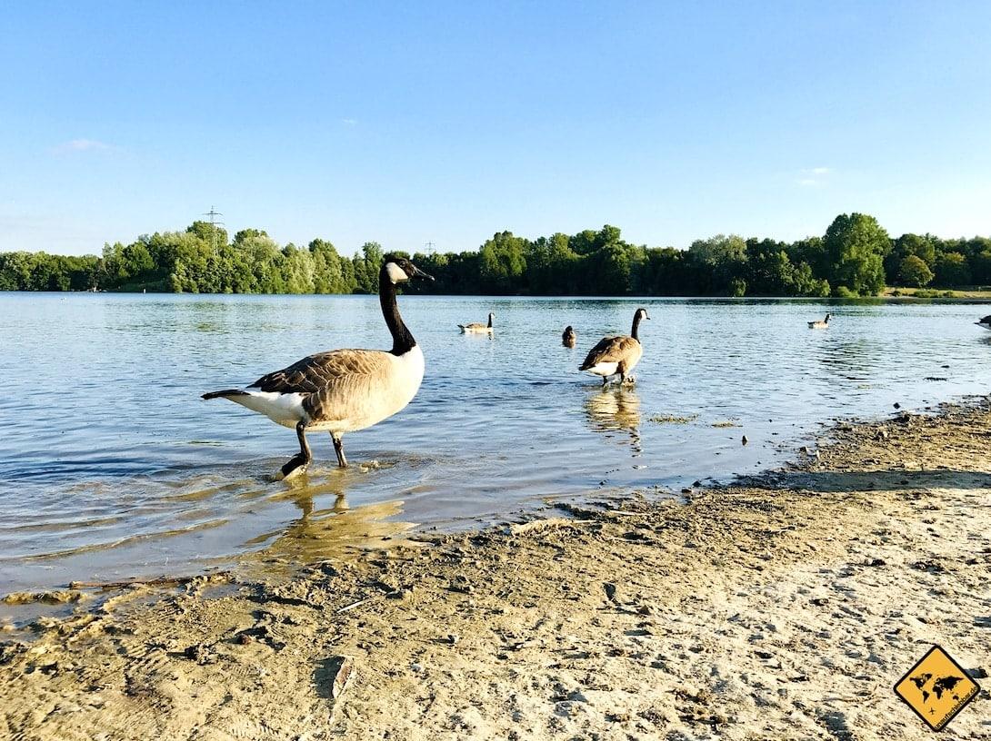 Duisburg 6-Seen-Platte