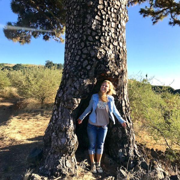El Tanque Teneriffa wandern Baum