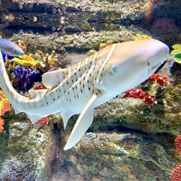 Exotischer Fisch Dubai Aquarium