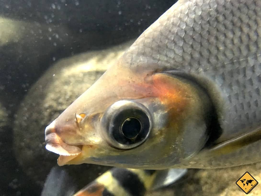 Fisch Poema del Mar Aquarium Gran Canaria