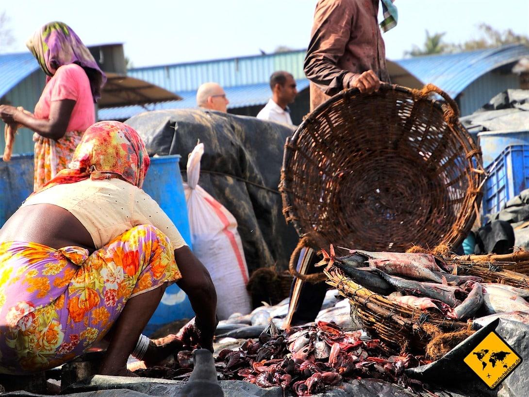 Fischfang Hygiene Sri Lanka