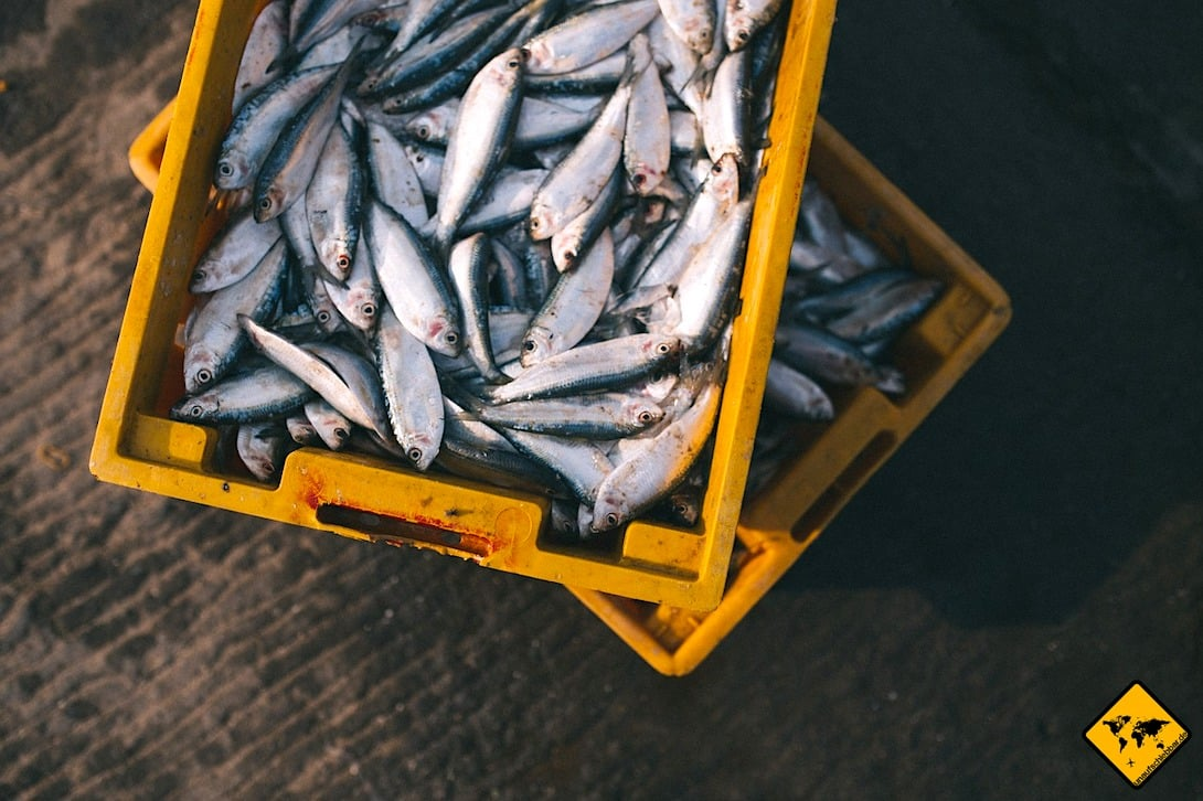Fischmarkt Jimbaran Bali