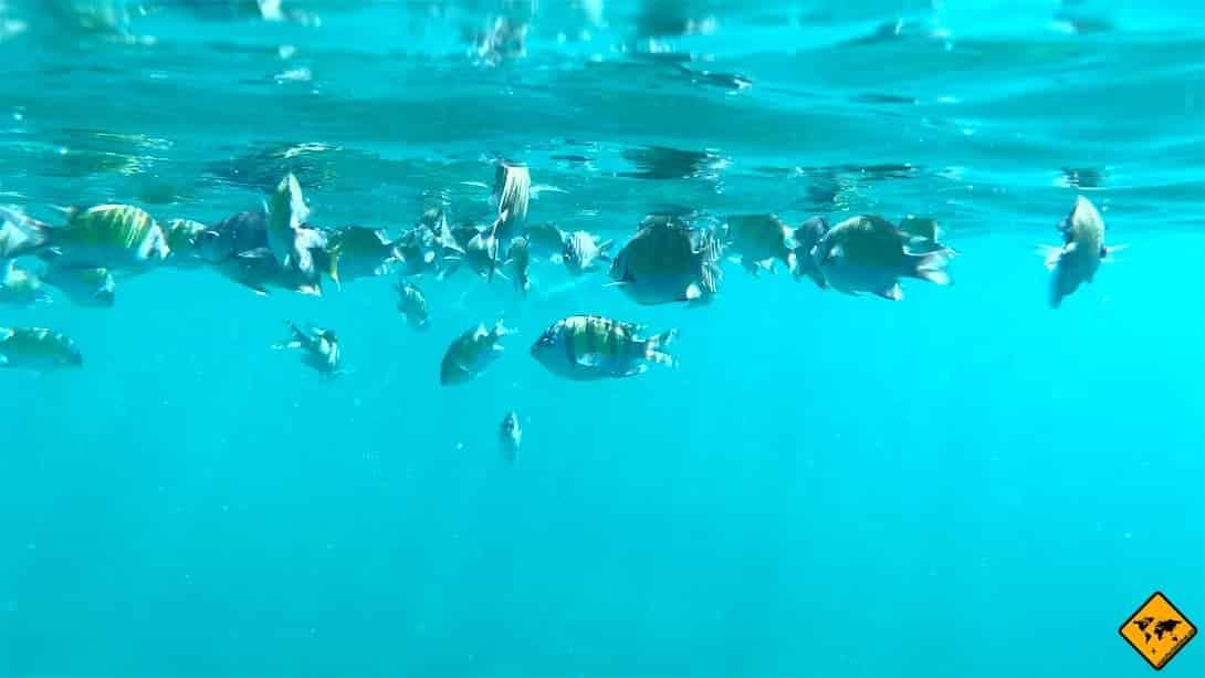 Fischschwarm schnorcheln Mai Thon Island Thailand