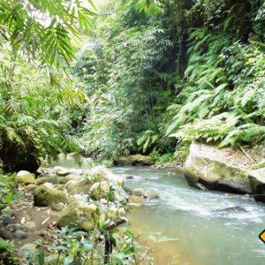 Fluss am Rande der Reisfelder der durch eine Wanderung in Ubud erreichbar ist