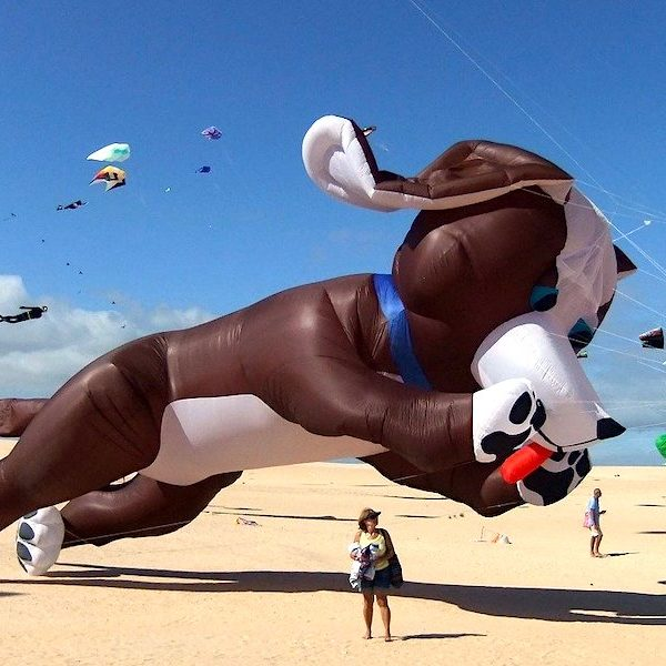 Fuerteventura Geheimtipps Drachenfest