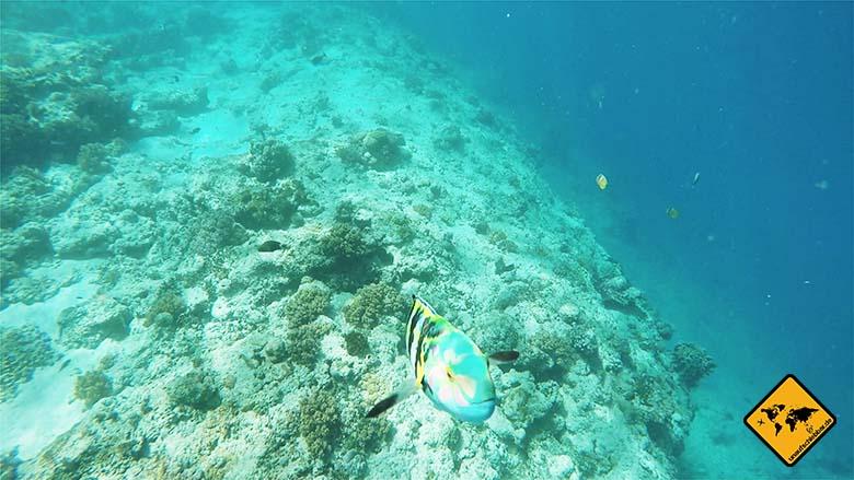 Gili Air schnorcheln Fisch