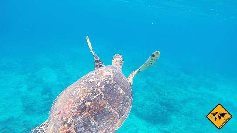 Gili Trawangan Schildkröte