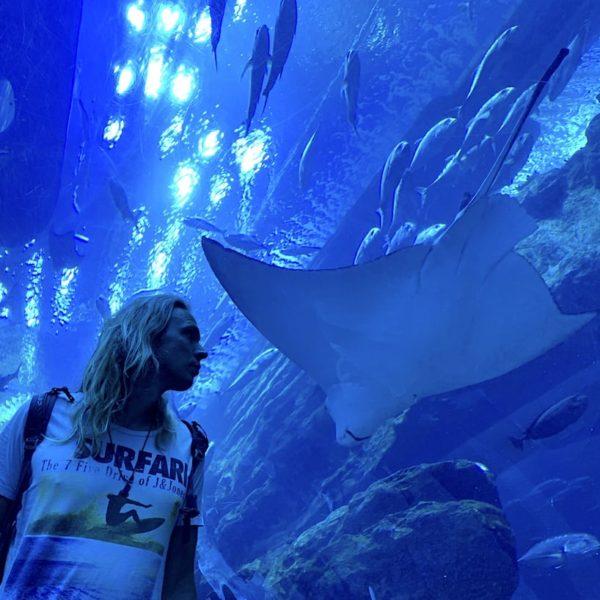Glastunnel Dubai Aquarium Rochen