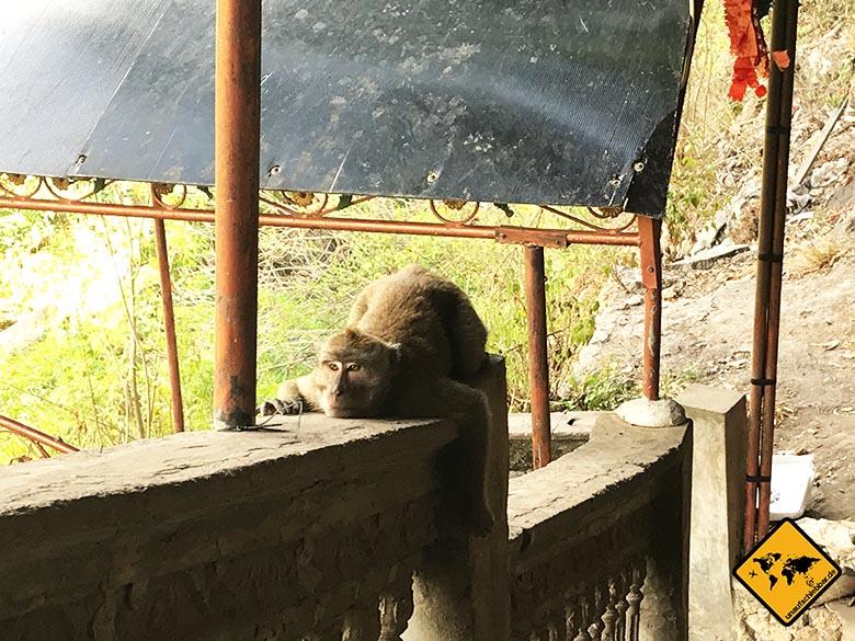 Goa Giri Putri Nusa Penida Affen Ausgangsbereich