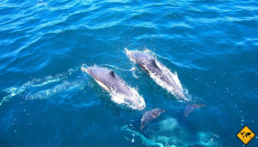 Gran Canaria Aktivitäten Delfine anschauen Bootstour