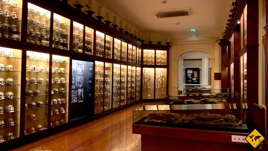 Gran Canaria Unternehmungen Museo Canario Totenköpfe