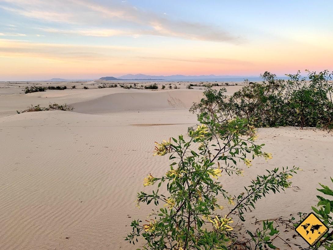 Gran Canaria oder Fuerteventura Sanddünen Strand