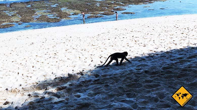 Green Bowl Beach Bali Affe Strand