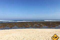 Green Bowl Beach Bali – 300 Stufen führen ins Glück