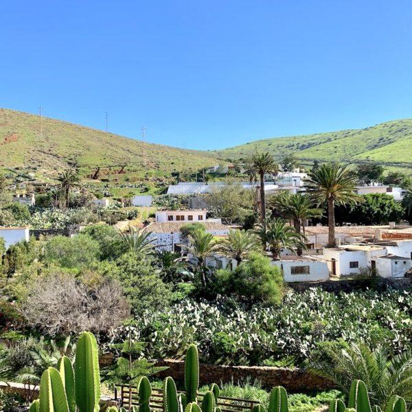 Grüne Natur Betancuria Fuerteventura