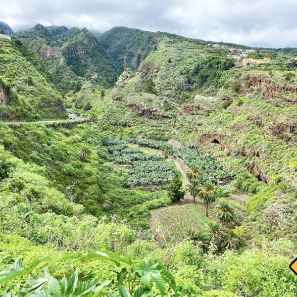 Grüne Natur LP-1 La Palma