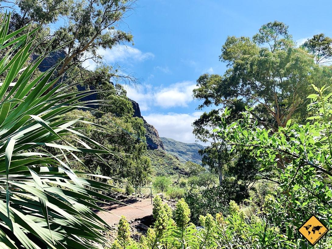 Grüne Schlucht Barranco de Guayadeque Gran Canaria