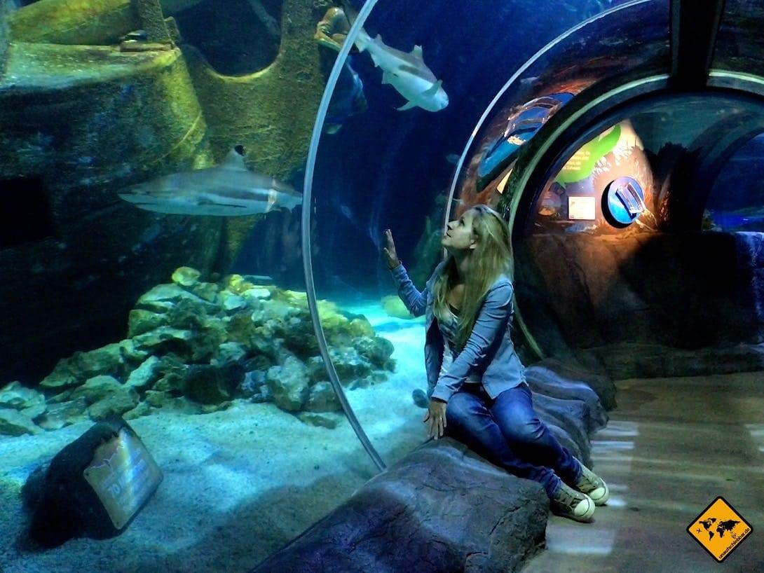 Haie Tunnel Oberhausen Sea Life