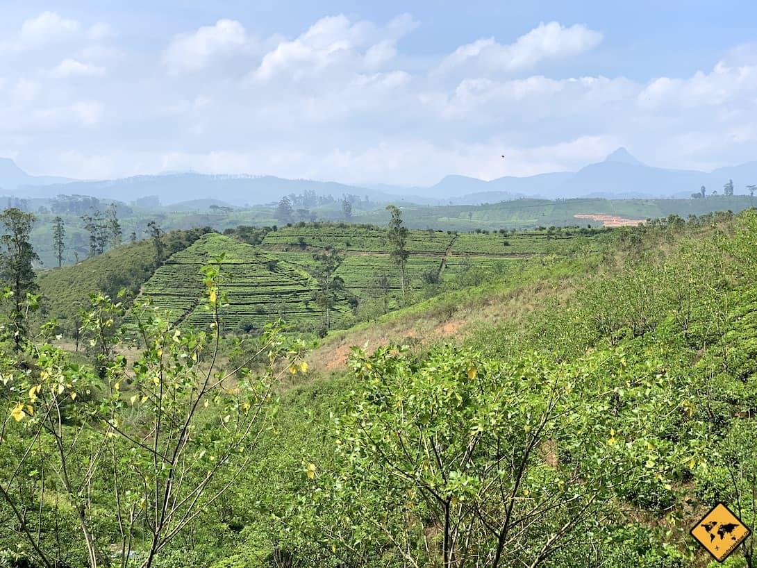 Hatton Sri Lanka Teeplantagen