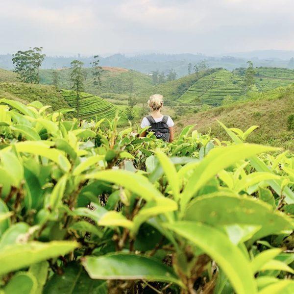 Hatton Teeplantage Sri Lanka