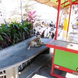 Hunde sind auf Bali ungefährlich und werden