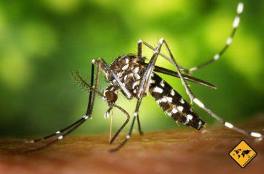 Impfungen Bali – alles was du wissen musst (Malaria, Tollwutimpfung etc.)