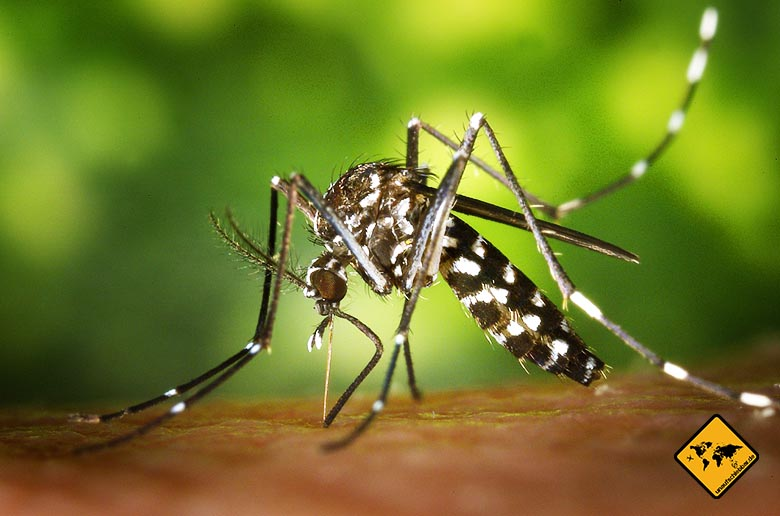 Impfungen Bali Impfempfehlung Tigermücke Moskito