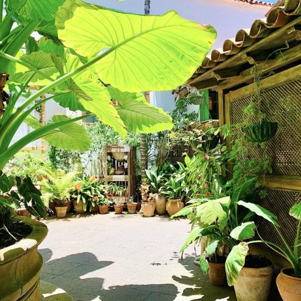Innenhof Pflanzen Casa de los Balcones