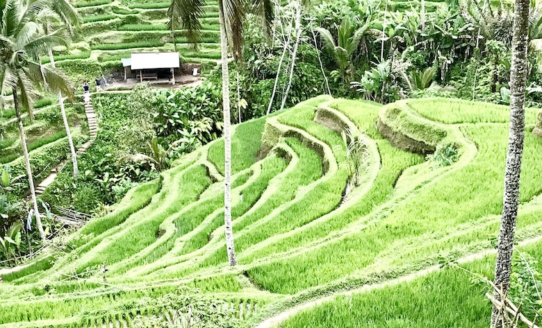Interessante Orte auf Bali Tegalalang Reisterrassen