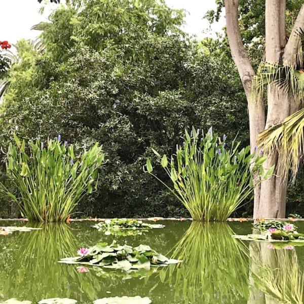 Jardin Botanico Puerto Cruz Teich