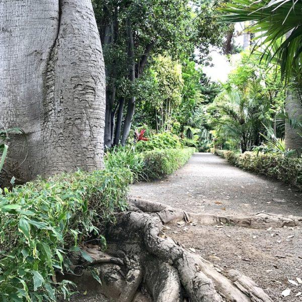 Jardin Botanico Puerto de la Cruz Teneriffa