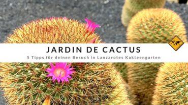 Jardín de Cactus – 5 Tipps für Lanzarotes Kaktusgarten