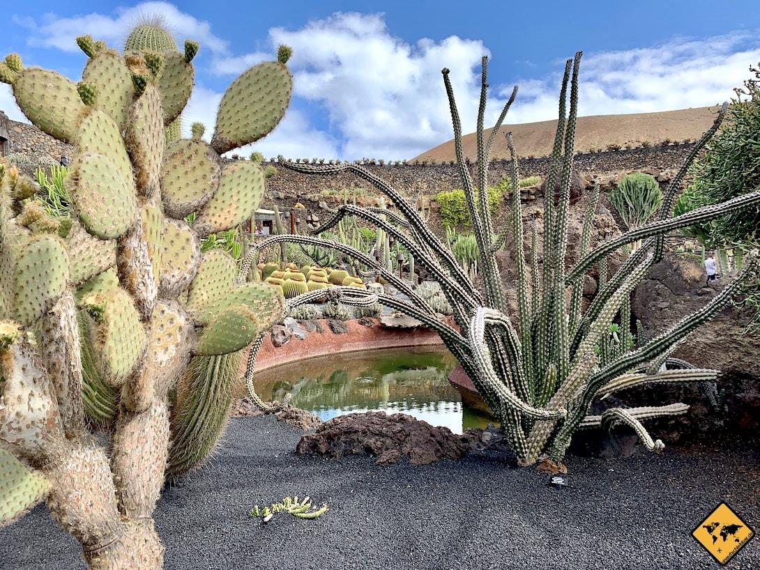 Jardín de Cactus Lanzarote Stacheln