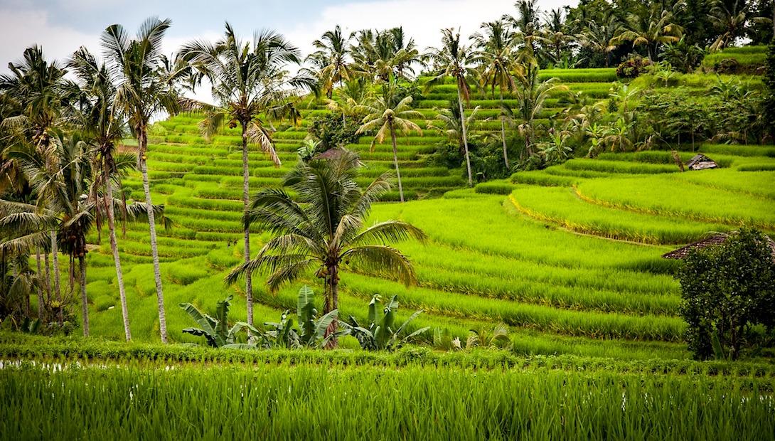 Jatiluwih Bali Reisterrassen