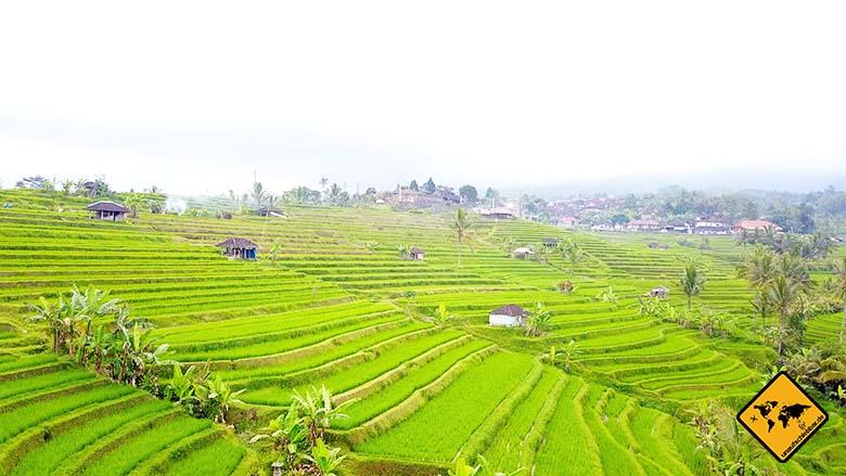 Jatiluwih Reisterrassen Bali Ausrichtung