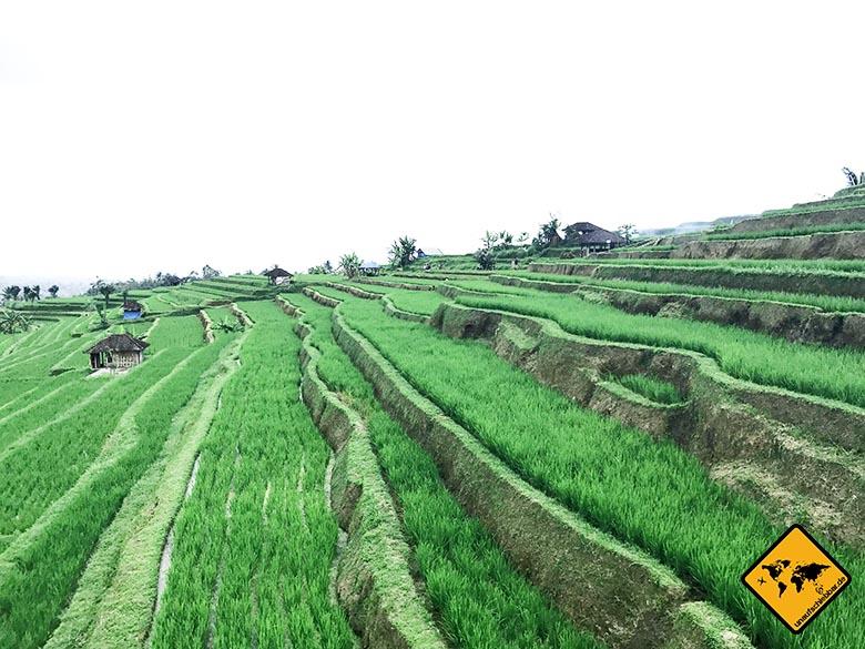 Jatiluwih Reisterrassen Bali Bewässerung Subak