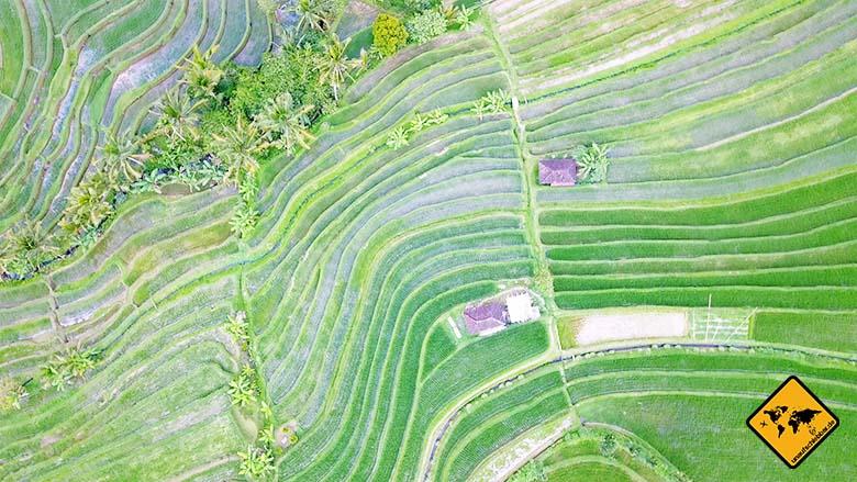 Jatiluwih Reisterrassen Bali Subak Bewässerung