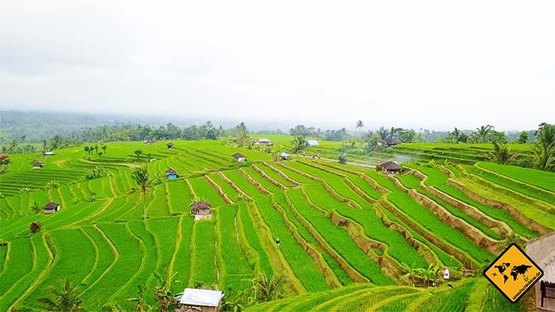 Jatiluwih Reisterrassen Bali Trekking
