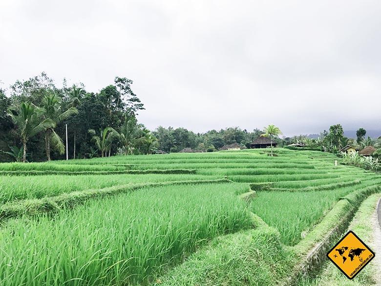 Jatiluwih Reisterrassen Bali Weg