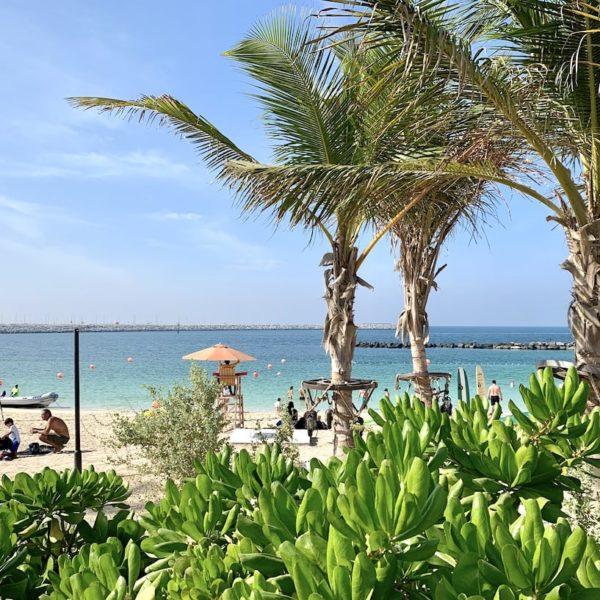 Jumeirah Strand Dubai grün