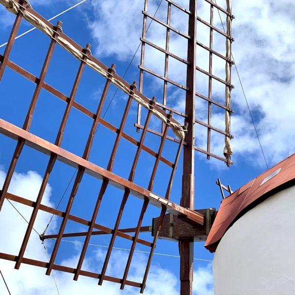 Kakteengarten Lanzarote Windmühle