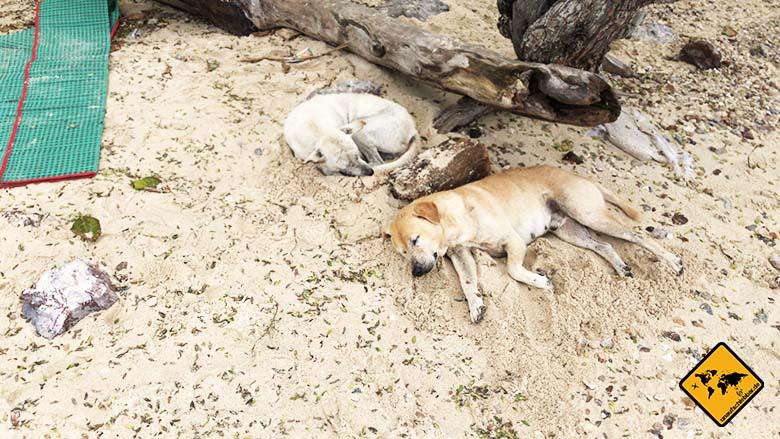 Koh Larn Island Had Ta Yai Beach Hunde