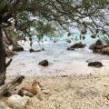 Koh Larn Thailand Had Ta Yai Beach Korallen