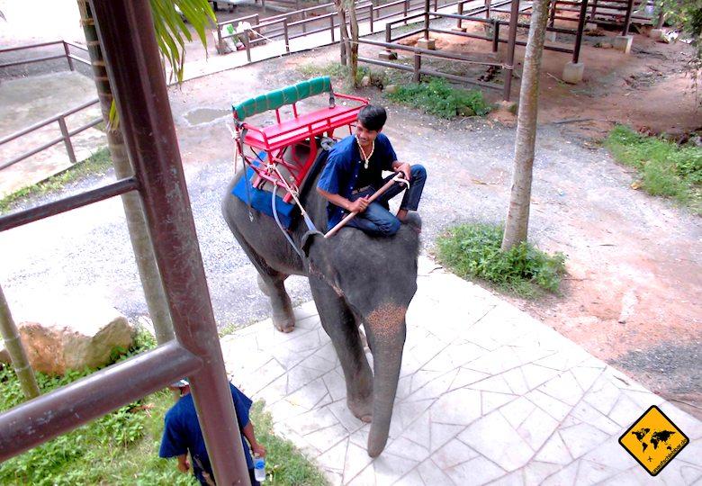 Koh Samui Attraktionen Elefanten Camp