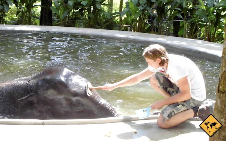 Koh Samui Attraktionen Elefanten baden